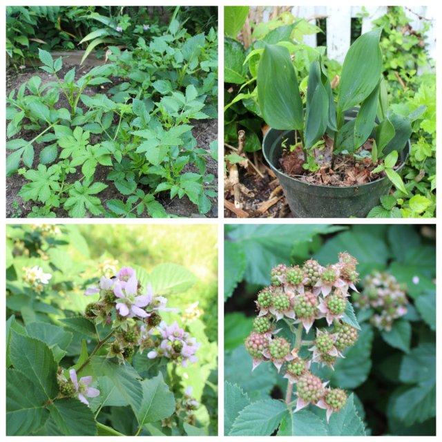 gardenupdate2